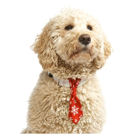 Snowflake Dog Tie – Red