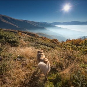 Need some holiday inspiration? Top 10 Dog-friendly Walking Holidays