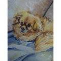 Personalised Pet Portrait 8