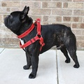 Red Leather Dog Harness 2