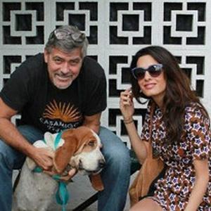 George & Amal Clooney adopt a dog