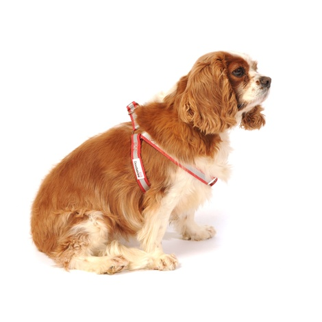 Reflective Bold Dog Harness – Red