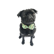 Percy & Co - Collar and Bow Tie - Alderley