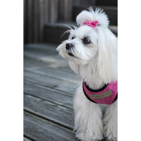 Candy Dog Harness - Pink 5