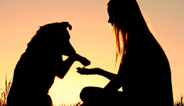 Spiritual Retreat For You & Your Dog 4