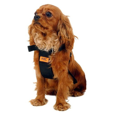 RAC Dog Car Harness  2