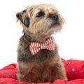 Red Ticking stripe Bow Tie  3