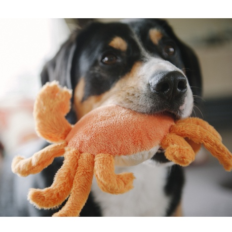 King Crab Plush Squeaky Dog Toy 3