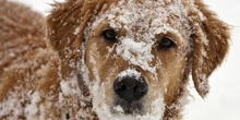 10 WAYS TO CARE FOR YOUR PET THIS WINTER
