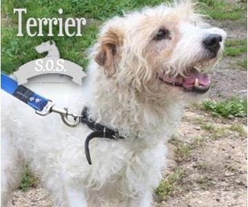 Terrier SOS