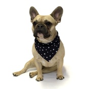 Dapper Pets - Navy Star Indiana Dog Bandana