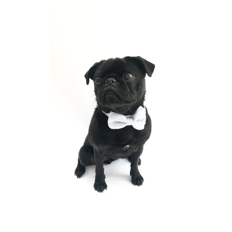 Collar and Bow Tie - Putney