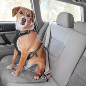 Ruffwear - Load Up Car Harness - Obsidian Black