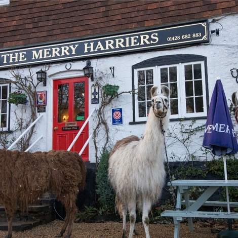 Merry Harriers Exclusive One Night Stay Voucher 2