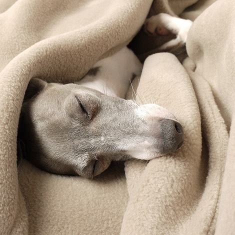 Double Fleece Dog Blanket - Camel 2