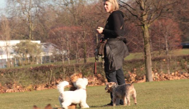 Chelsea Dog Walker 2