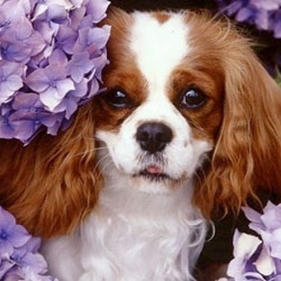 WHY WE LOVE CAVALIERS