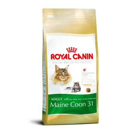 Maine Coone 31 Cat Food