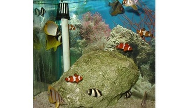 Aquarium Design Centre