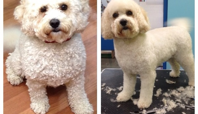 Perfect Paws Dog Grooming 10
