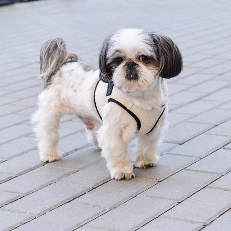 Soho Dog Harness - Cream 4