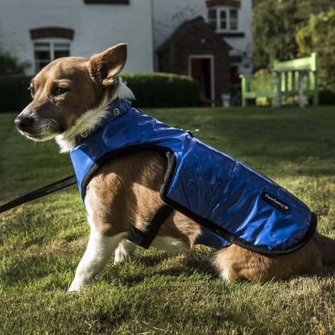 Brighton Bubble Hoodie Dog Coat - Blue 2
