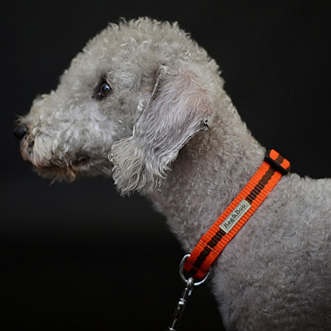 Orange Dog Collar 4
