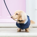 Liberty London Luxury Dog Coat 4