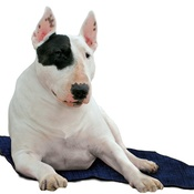 Aqua - Dog Cooling Mat in Pacific Blue