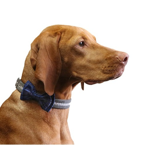 Dog Collar Bow Accessory - Tartan Blue
