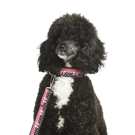 Dolly  Dog Lead 2