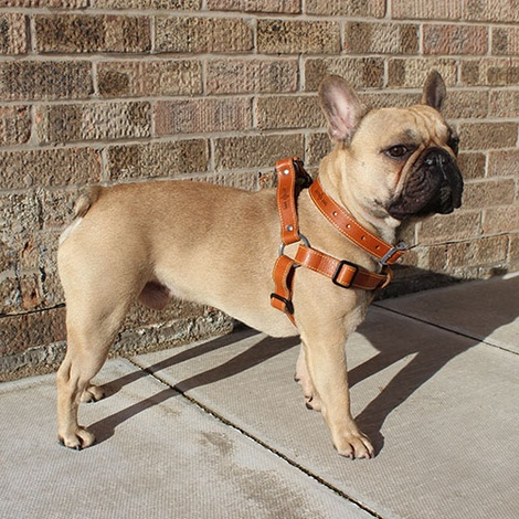 Tan Brown Leather Dog Harness 2
