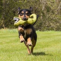 Aretha the Alligator Squeaky Plush Dog Toy 6