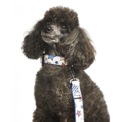 "Star Gaze Dog Collar 1"" Width 2"