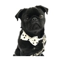 Collar, Bow Tie and Lead Set - Mayfair 2