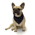 Navy Star Indiana Dog Bandana