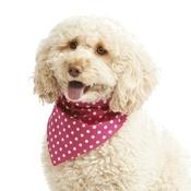 Pet Pooch Boutique - Pink Polka Dot Dog Bandana