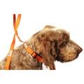 Bold Dog Collar – Orange 2