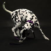Reg&Bob - Purple Dog Lead