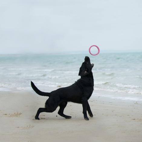 BecoHoop Dog Toy - Pink 3