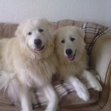 Koshi & Charley
