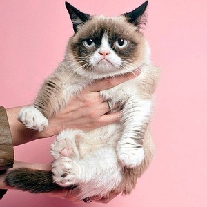 Top 10 Cats You Have To Follow on Instagram!
