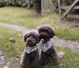 Inspiration 12: Two or More Dogs