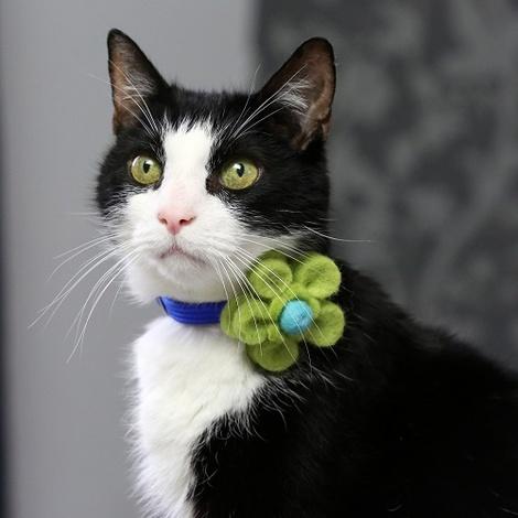 Bloom Cat Collar Flower Accessory - Lime & Aqua