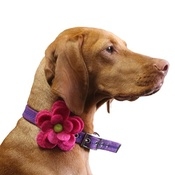 Love from Lola - Bloom Dog Collar Flower Accessory - Fuchsia & Lime