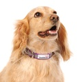 Bold Reflective Dog Collar – Purple  4