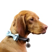 Love from Lola - Dog Collar Bow Accessory - Polka Dot