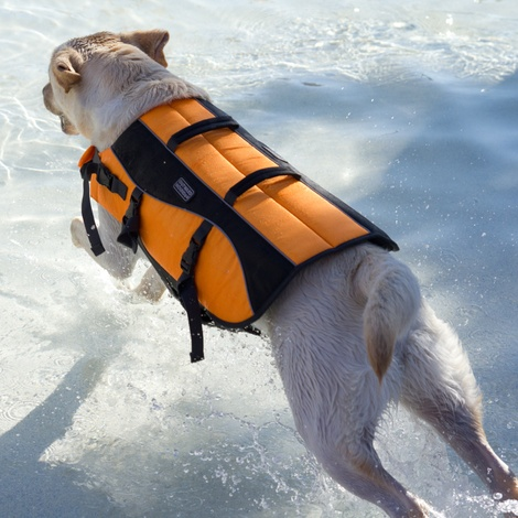 Life Jacket for Dogs - Orange 4