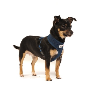 Airmesh Dog Harness – Navy
