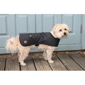 Bold in Black Dog Coat 2